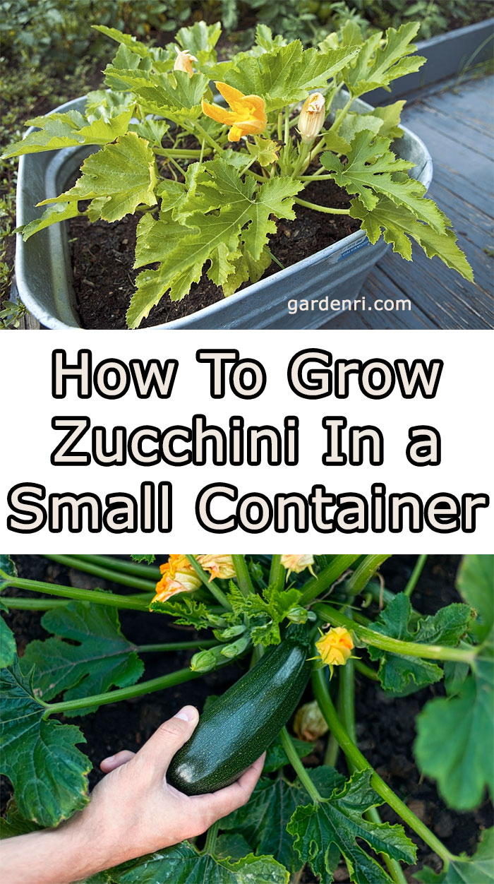 How To Grow Zucchini In a Small Container - Gardenri