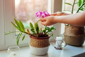 Orchid Plant, Best Smelling Plants for Bedroom
