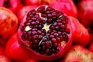 pomegranate seeds, How To Grow Pomegranate In Pots