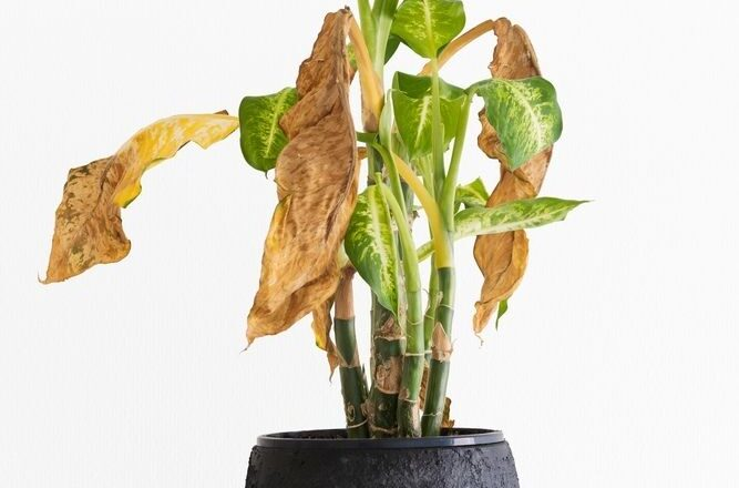 Quick Hacks That Will Revive Dying Plant Back to Life