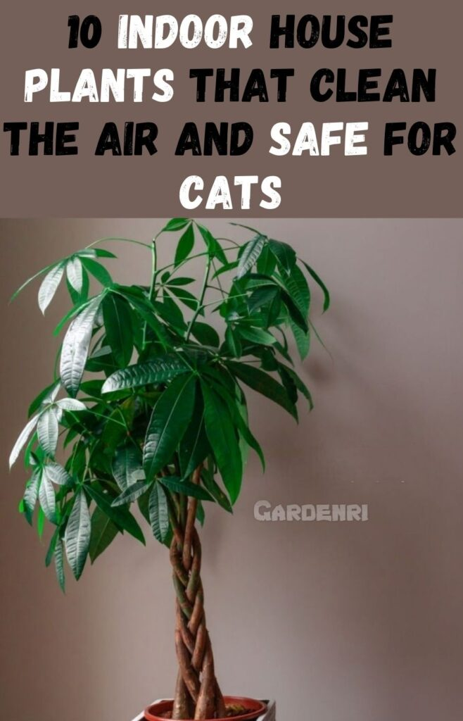 10 Indoor House Plants that Clean the Air