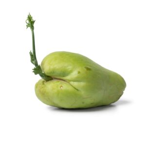 How to plant chayote At Home in 4 easy steps!