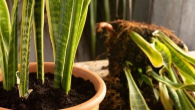 How and when to transplant plants